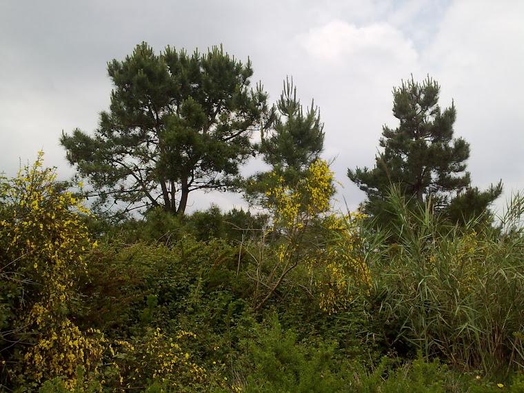 ainda não chegaram herbicidas nem fitoquímicos