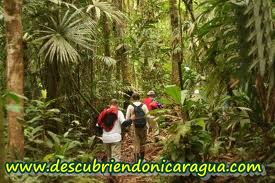Nicaragua  Agriculture forestry and fishing