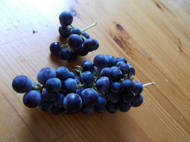 Syyskuu viinirypäleet