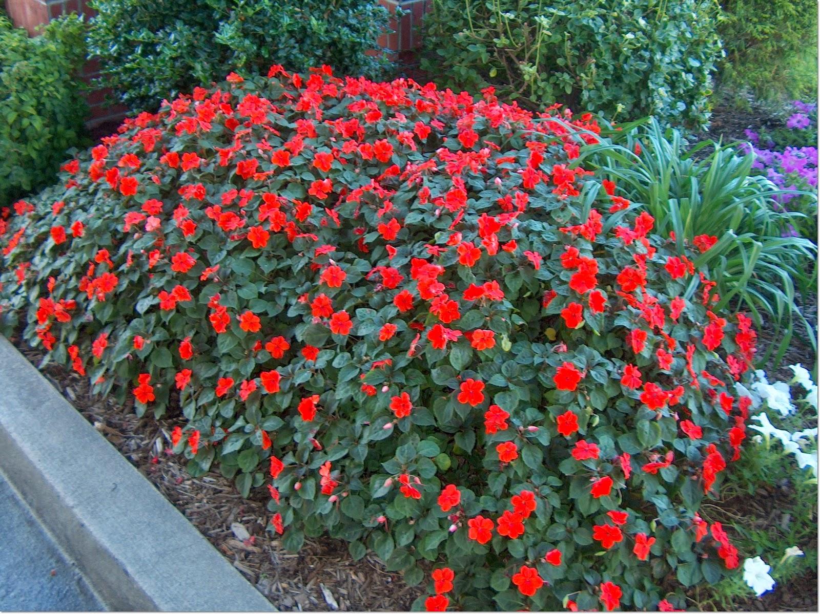 Sadnja sezonskog cvijeća - Moj Vrt Cvijeća