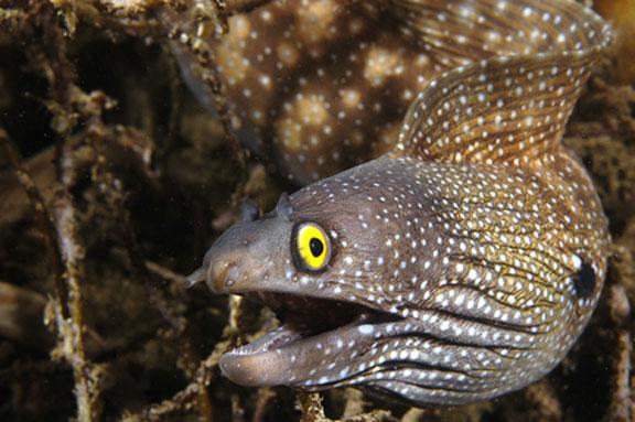 [Image: Moray+eel2.jpg]