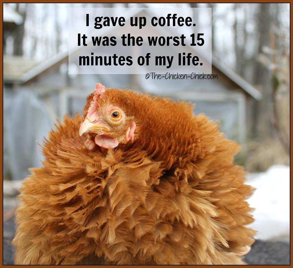 I gave up coffee. It was the first 15 minutes of my life.
