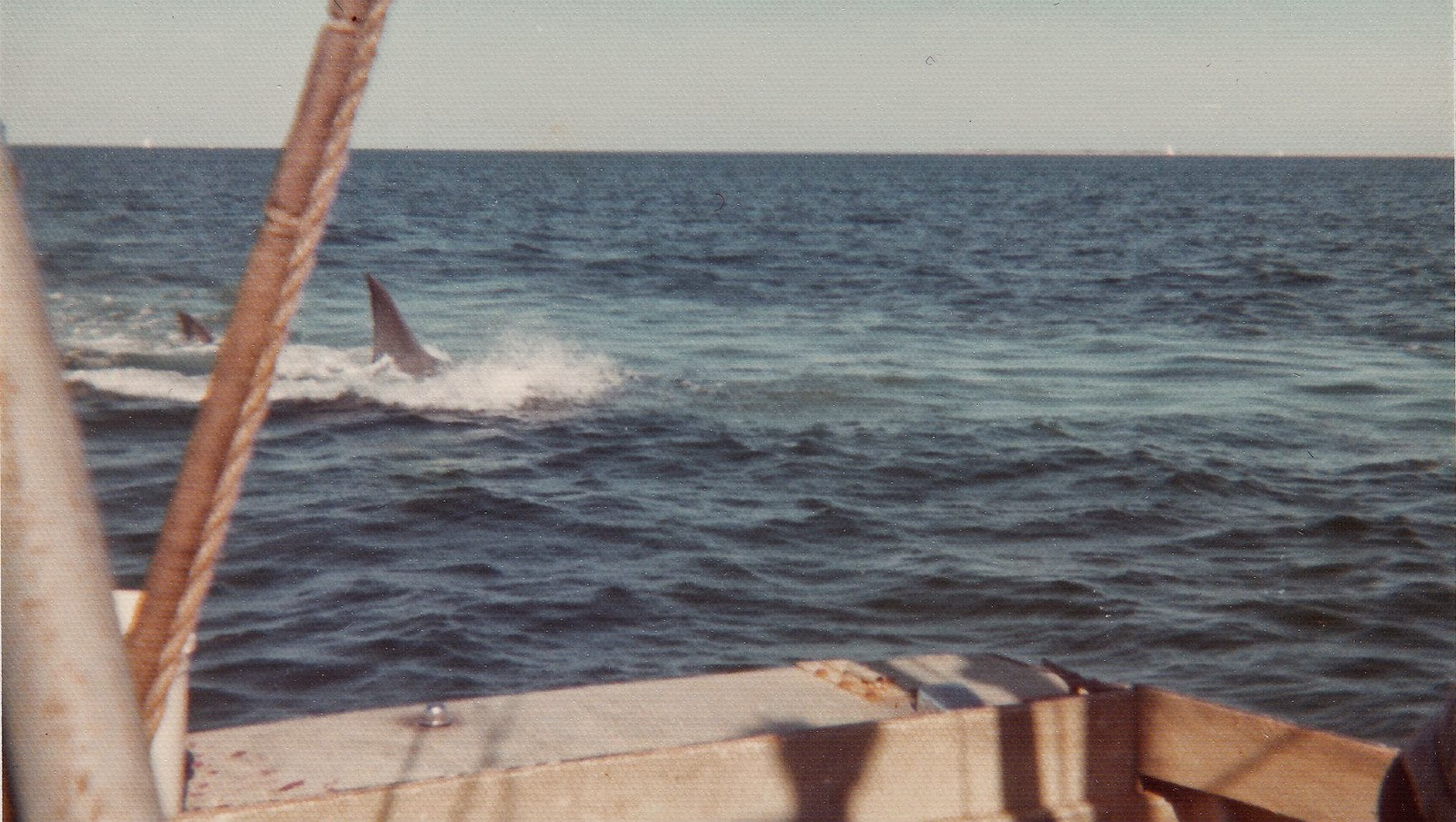 Rare Color Photos From The Filming Of Jaws On Katama Bay