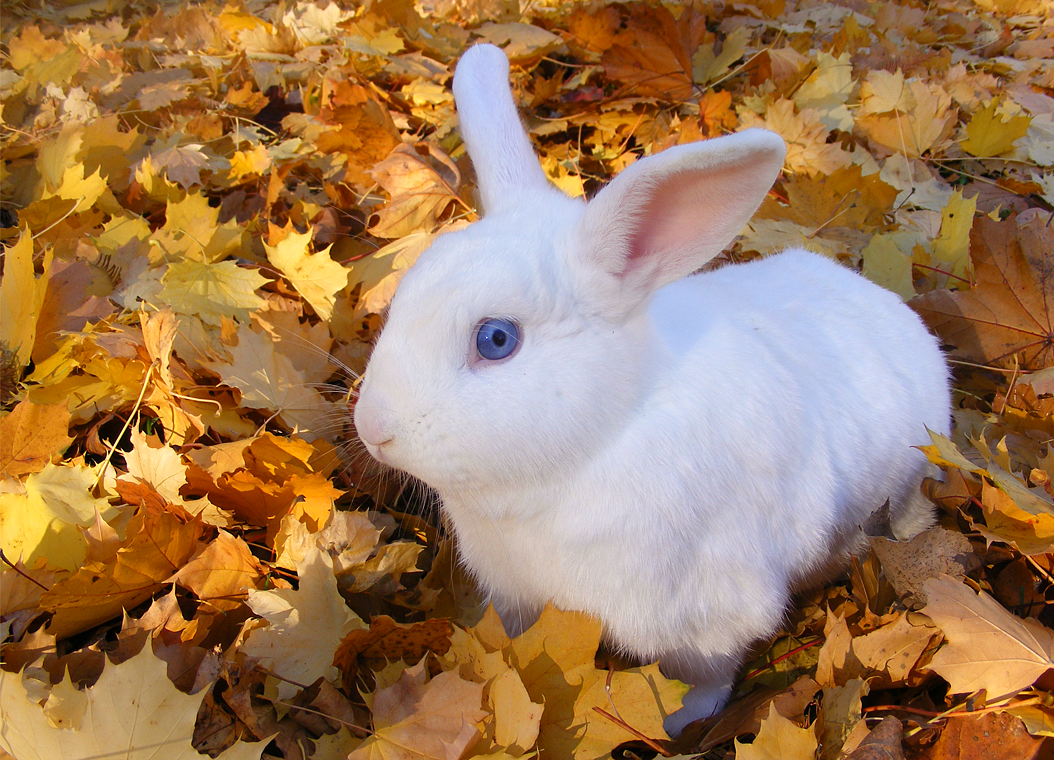 http://4.bp.blogspot.com/-sWLSmrUN6XA/UJwGksqtHkI/AAAAAAAADCo/VdpNVZky8pc/s1600/rabbit+in+leaves.png