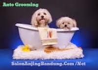 SALONANJING.COM