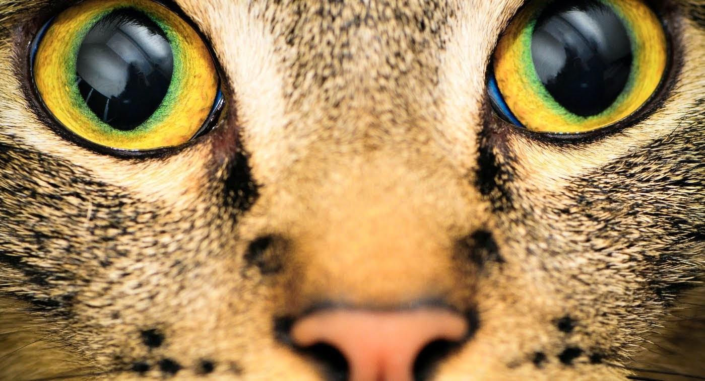Como é a visão dos animais?