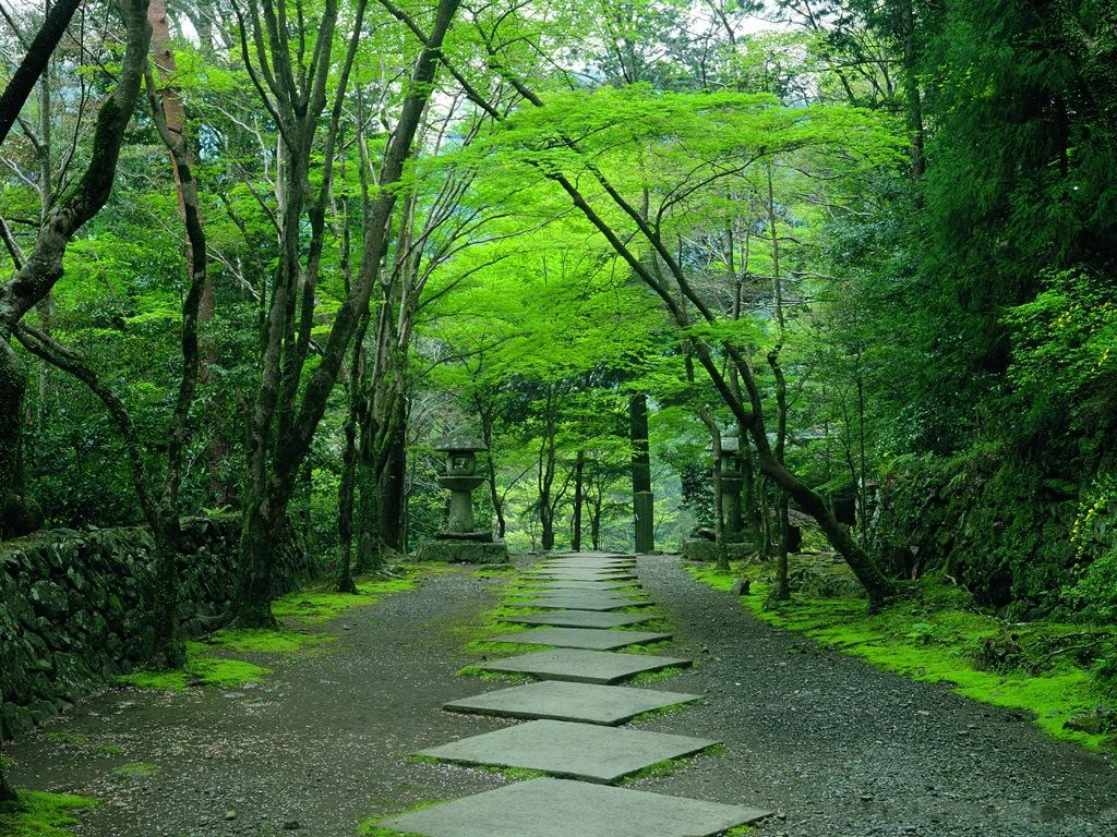 Kyoto The Beauty In Japan Picture Gallery