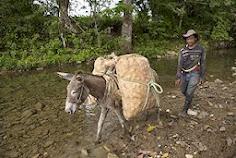 Campesinos y su lucha por la tierra