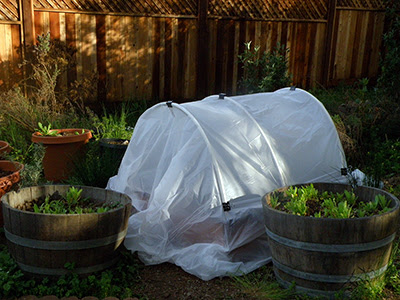 Hoop House with Cover Closed