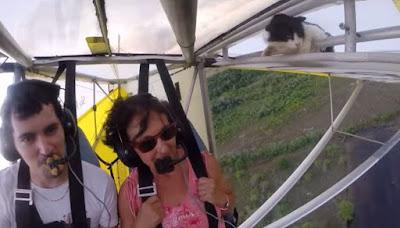 """Γάτα, λαθρεπιβάτης σε ανεμόπτερο το """"σκυλομετάνιωσε"""""""