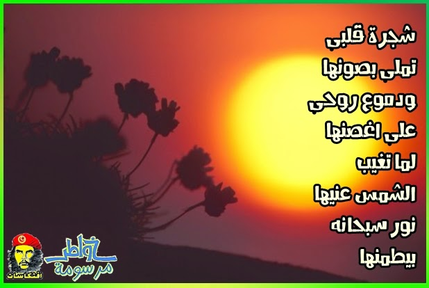 شجره قلبي تملي بصونها و دموع روحي علي اغصانها