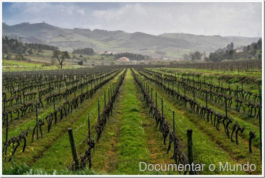 Enoturismo na Quinta do Gradil; vinhas na Quinta do Gradil