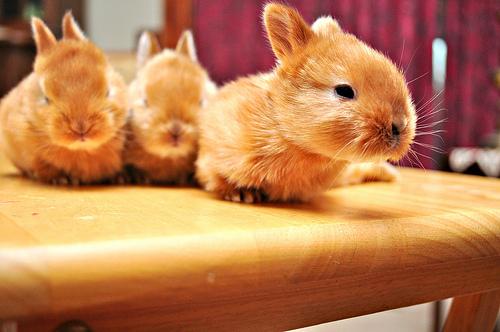 adorable baby bunnies