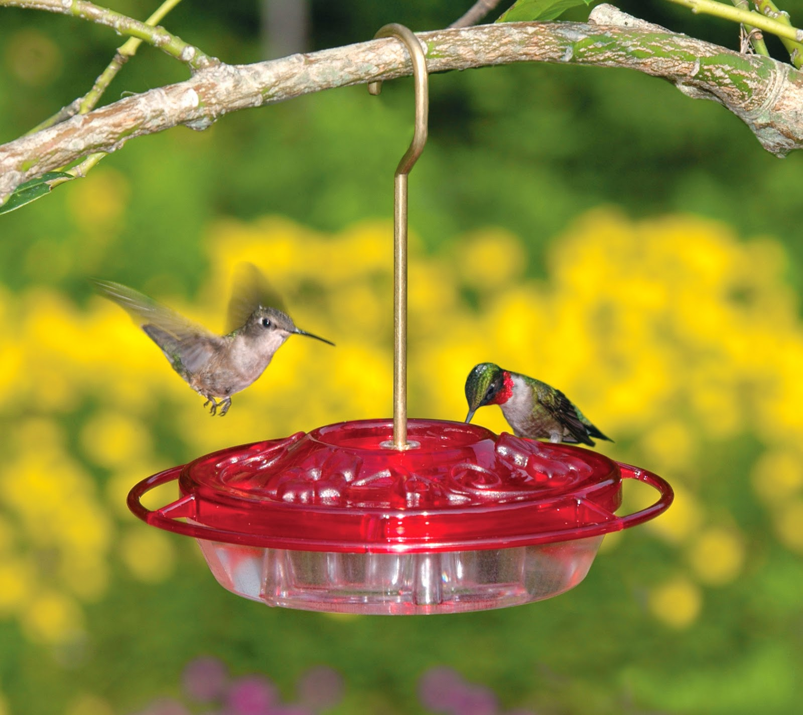 How Long Can A Hummingbird Go Without Food