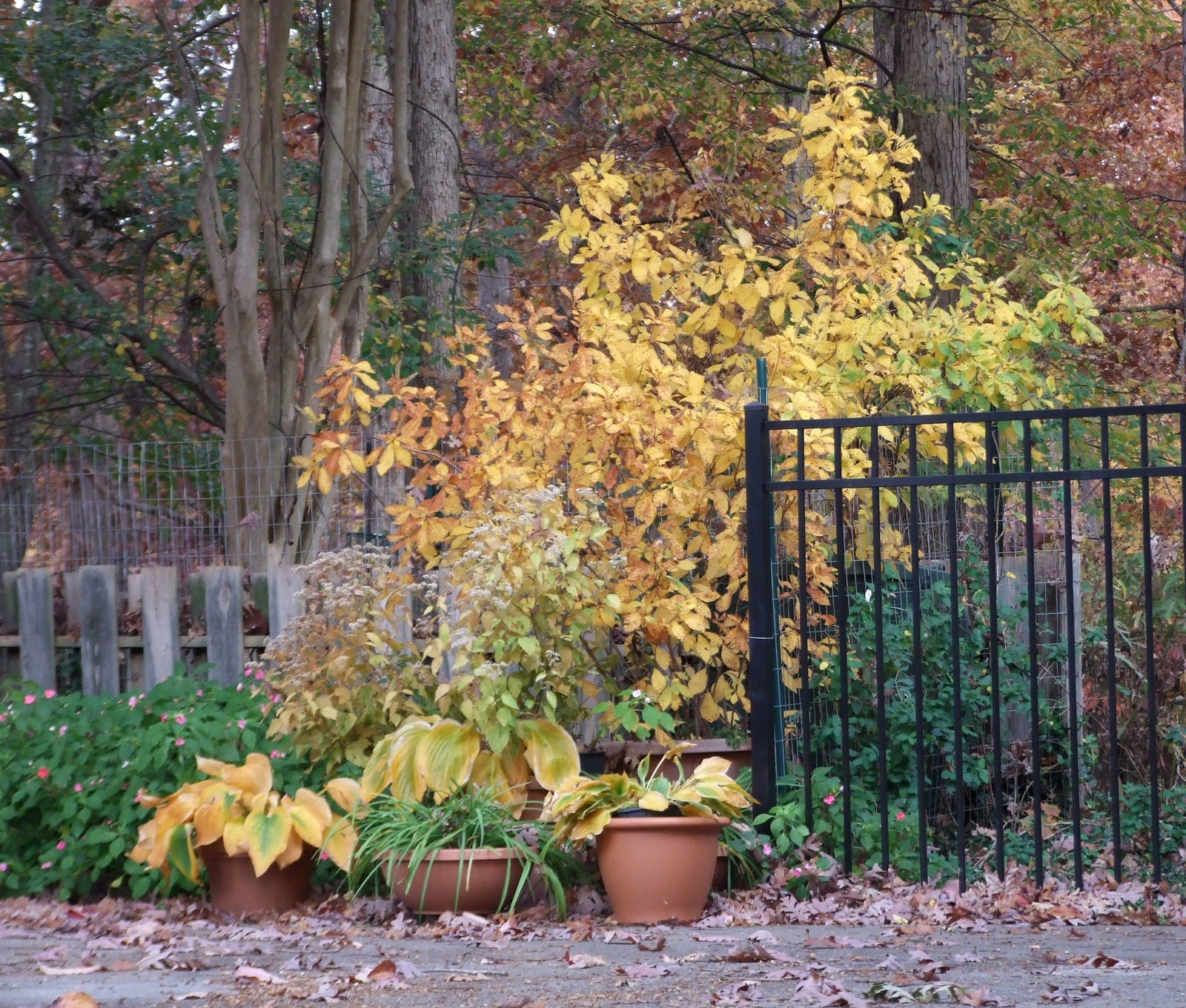 near the black fence at the entry to the backyard