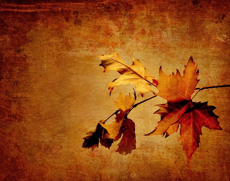ya llegó el otoño!