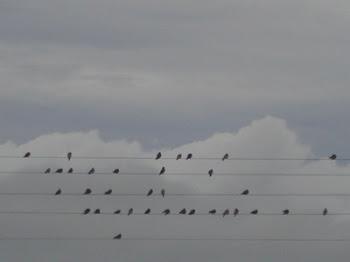 Pássaros, Pauta...- Notas Musicais