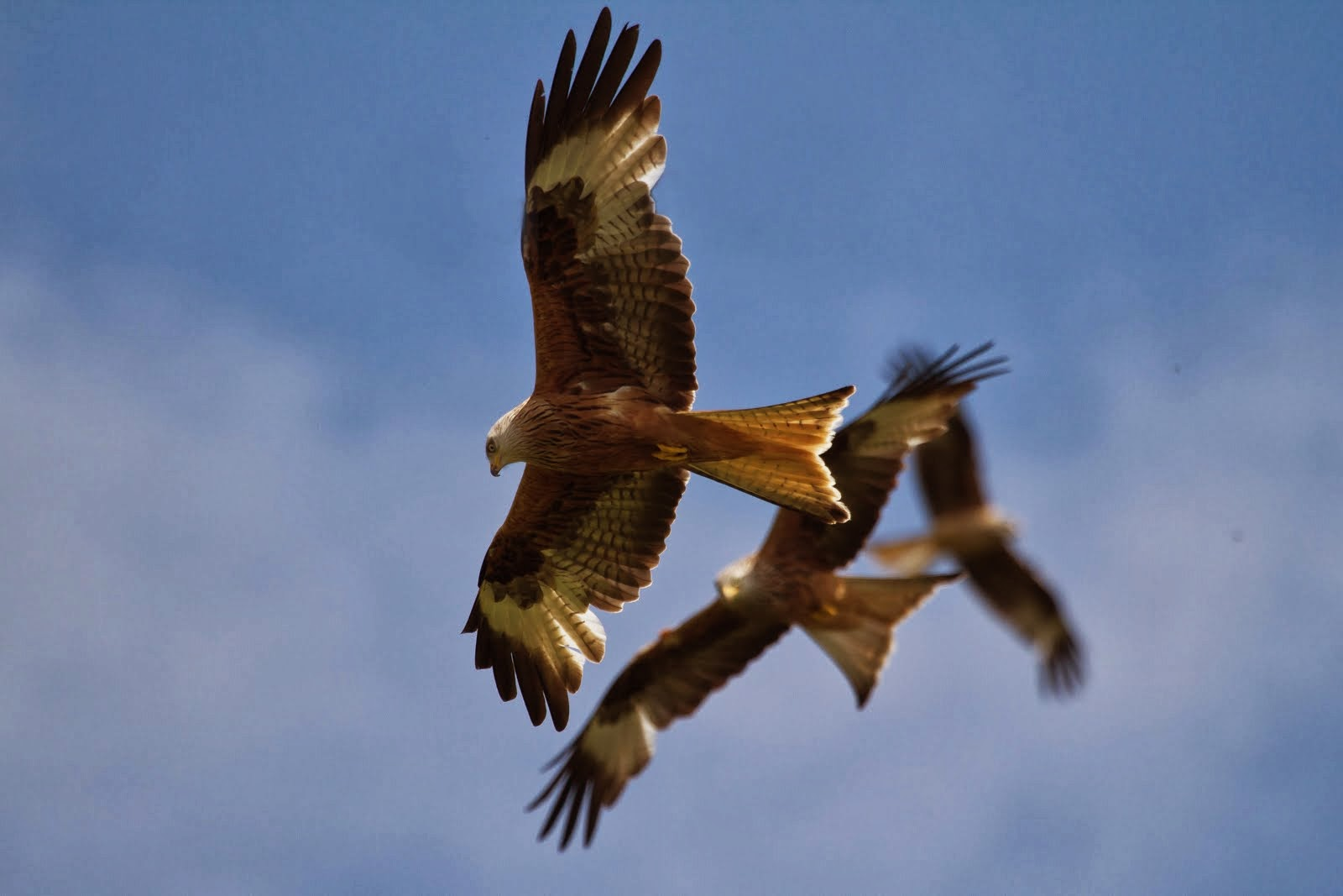 Cuddesdon Birds: