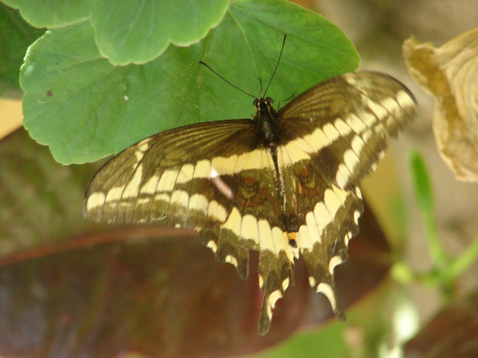 17-febrero-18-19-20-21...2011,super mensajes en Mariposas Alienes y OIvni triangulares peligrosos s