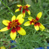 JULY STALWARTS: FLOWERS THAT BLOOM IN THE TEXAS FURNACE