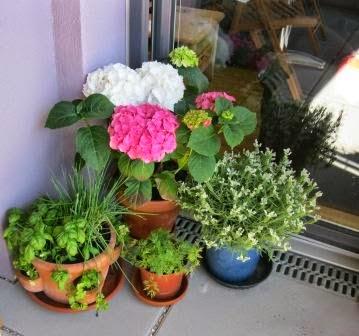 Giftige Und Ungiftige Pflanzen Im Garten Und Auf Dem Balkon Eltern