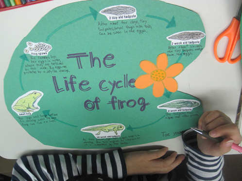 Students make frog posters for science