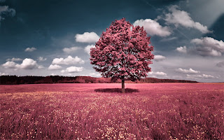 Clouds Trees Sky Flowers Pink Grass fields Hills HD Wallpaper