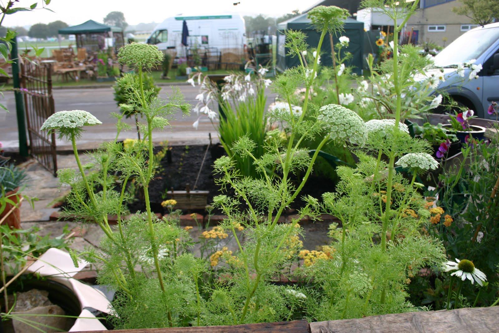 Backyard Flower Farmer : medal winning garden (ahem!)  Common Farm Flowers  The Flower Farmer