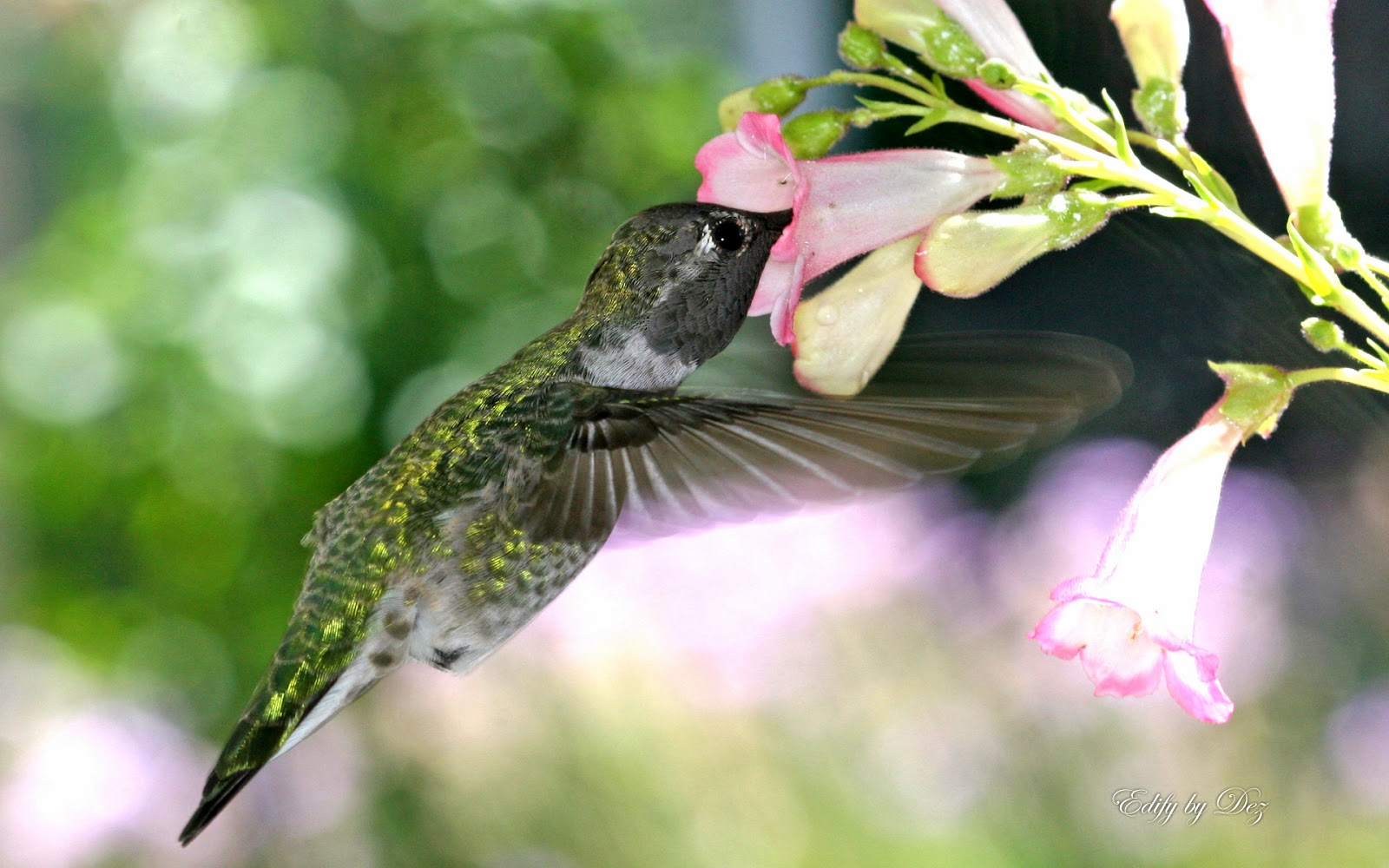 http://beautifulwallpapersfordesktop.blogspot.com/2014/01/hummingbird-wallpapers-hd.html