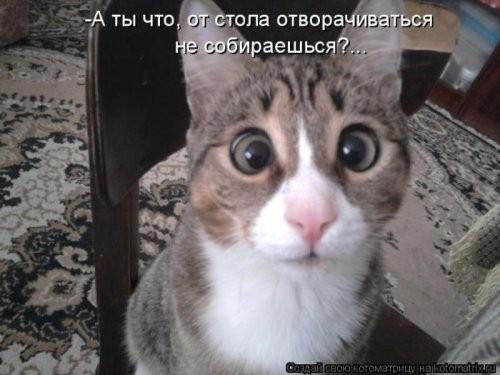 Фотоподборка Котоматрицы (23 фото)