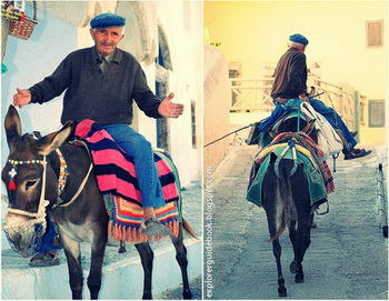 Tempat wisata di yunani santorini mykonos pulau paling indah di Yunani Donkey in Santorini Greek Islands
