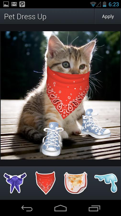 Cat Aviary