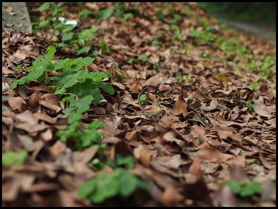 Minolta MD Zoom 35-70mm f3.5 Macro@Olympus E-PL3