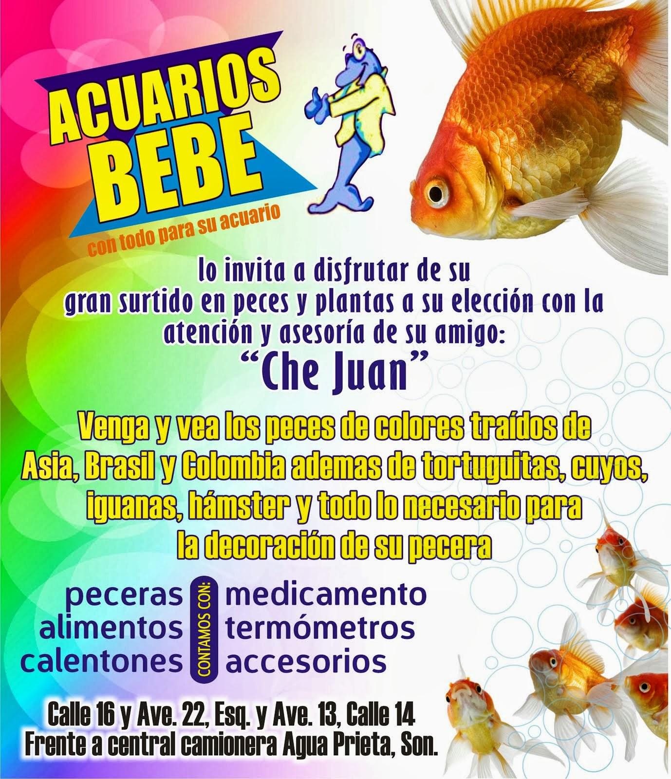 Acuarios BeBe