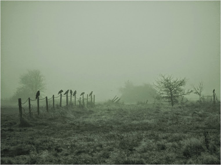 Compact Camera, Best Photo of the Day in Emphoka by Andrew Warran, Fujifilm FinePix HS10, https://flic.kr/p/e6Uiba