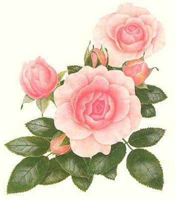 Fotos, imagenes y fondos de pantalla de flores.