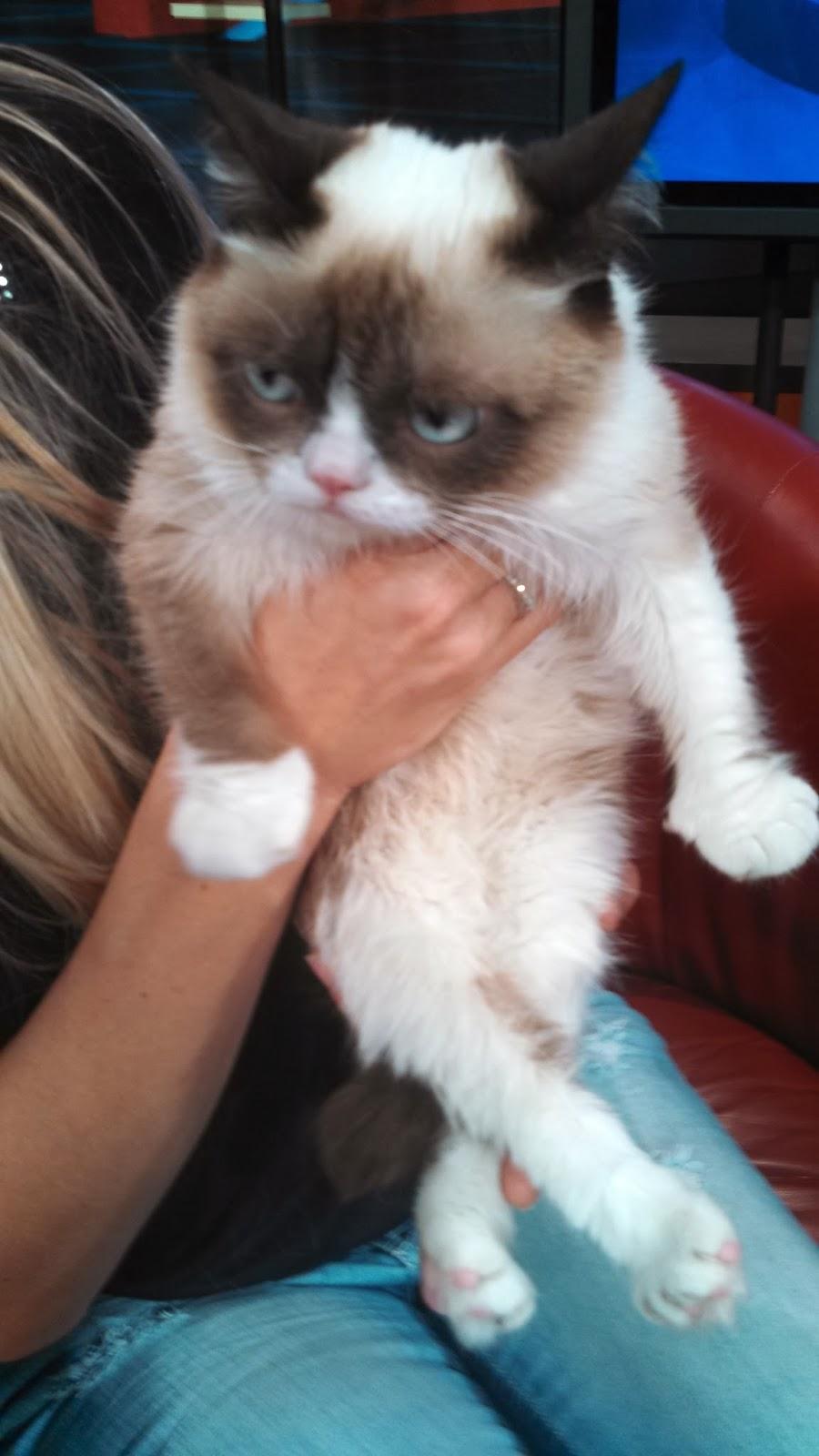 Grumpy Kitty Birthday ...