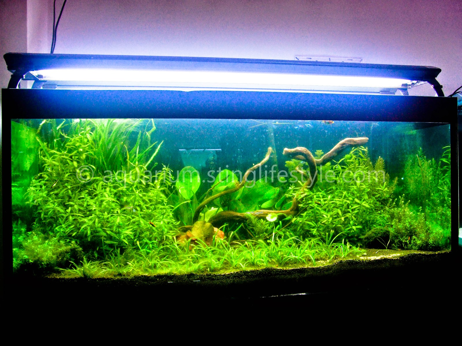 Planted aquarium lighting for sale for Plante aquarium