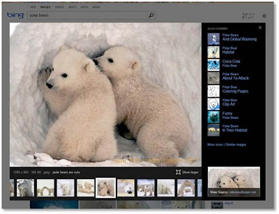 Bing New Image Search Polar