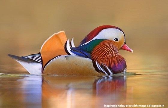 juza bird