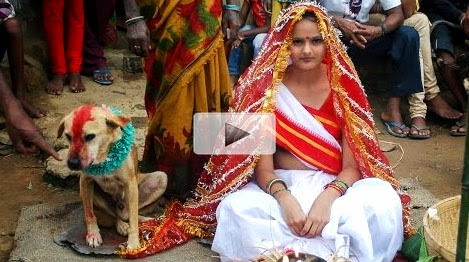 Wedding, women married a dog in traditional ceremony in India