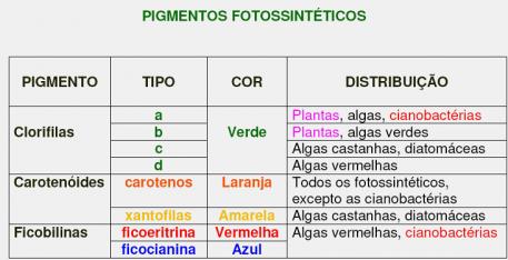 Il pigmentary nota su un corpo al bambino circa un anno
