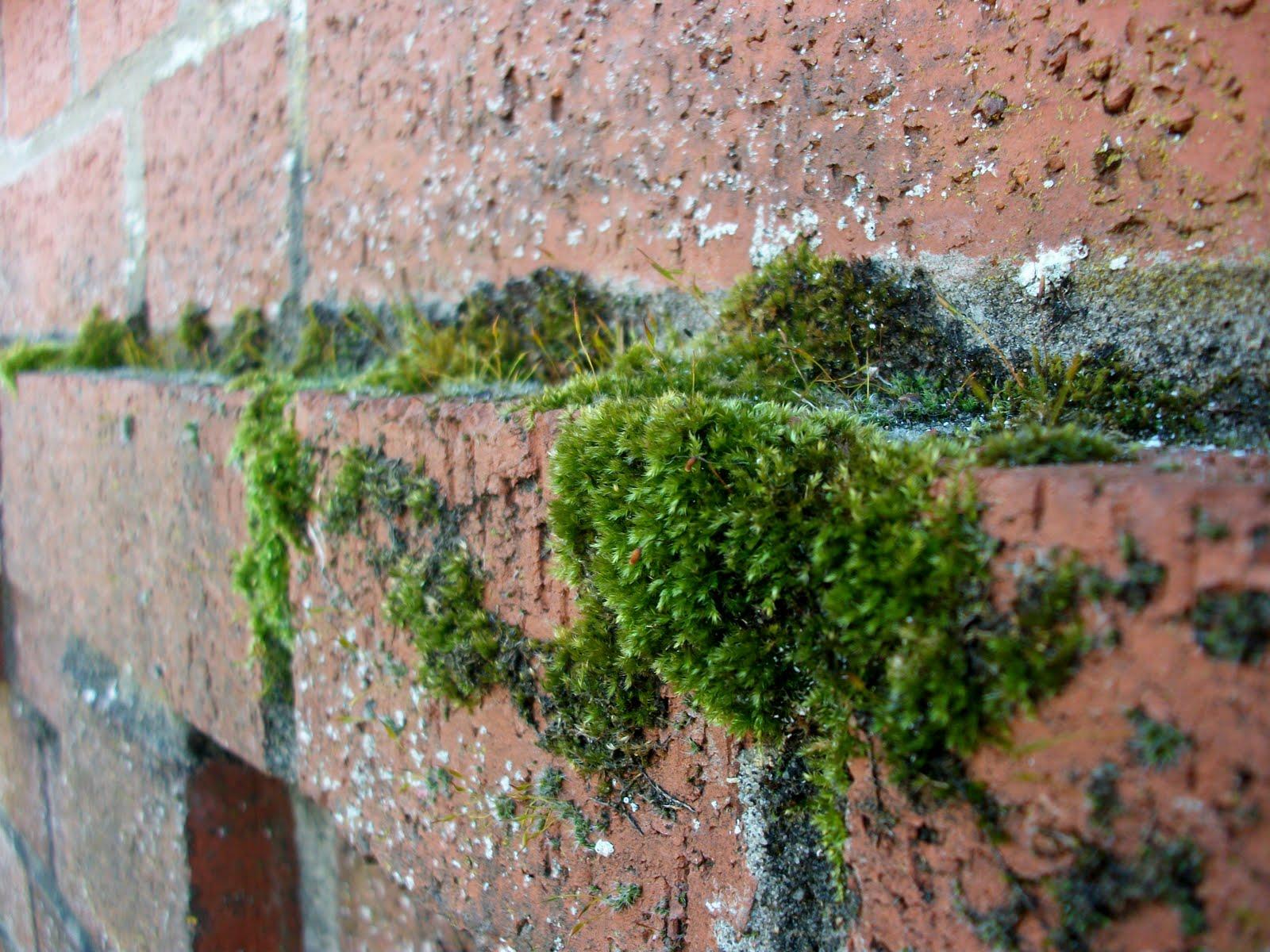 Katerina panayi my urban nature for Urban nature