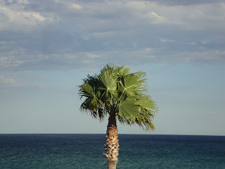 L'Almadrava lonely palm tree and turquoise sea
