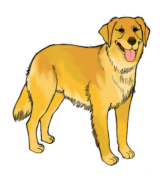 yellow lab puppy drawing how to draw a yellow labrador youtube mtm