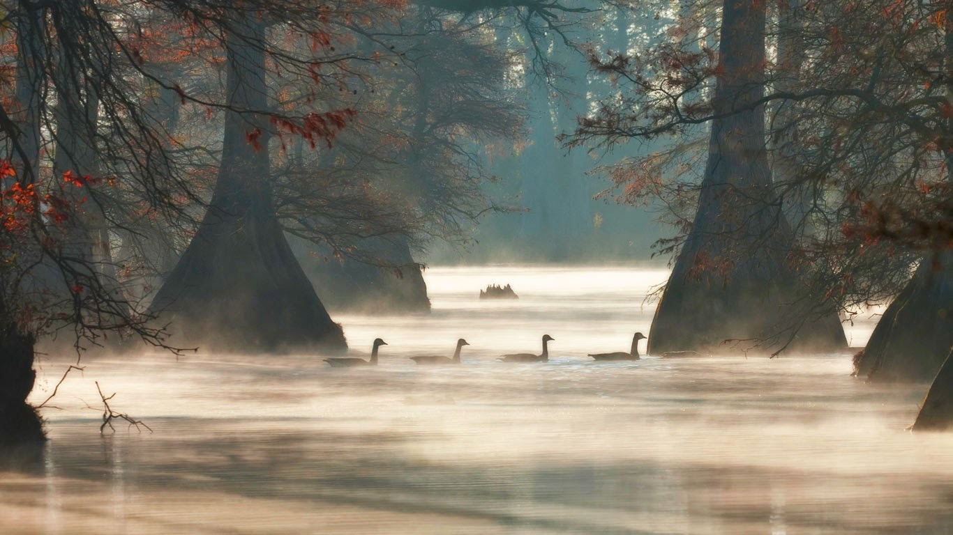 Canada geese in Hill Lake, Pulaski County, Arkansas (© Barry Hamilton/Corbis) 179