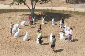 Rabbit insurance newport beach ca