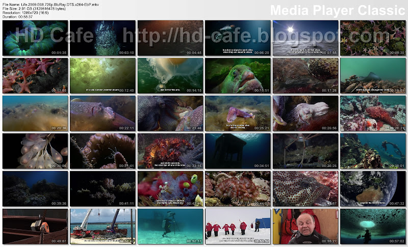 Life 2009 Episode 08 - Creatures Of The Deep video thumbnails