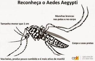 Os sintomas aparecem entre três e doze dias após a picada do mosquito, e podem perdurar por uma semana.  Assim como no tratamento da dengue, não é recomendado o uso de ácido acetilsalicílico, devido ao risco de hemorragia.