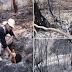 Vegetação deve demorar 10 anos para se regenerar após queimada na Serra do RJ.